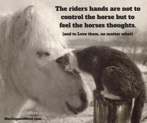 the-riders-hands-are-not-to-control-the-horse-but-to-feel-the-horses-thoughts-2